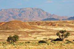 Paysage de désert de Namib Images libres de droits