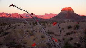 Paysage de désert de parc national de grande courbure au coucher du soleil Photo stock