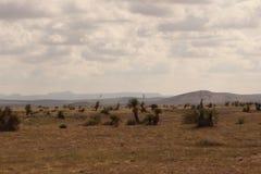 Paysage de désert du Nouveau Mexique Image libre de droits