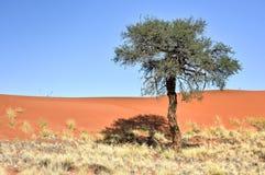 Paysage de désert - NamibRand, Namibie Photos stock