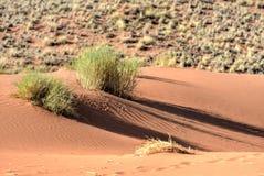Paysage de désert - NamibRand, Namibie Photos libres de droits