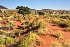 Paysage de désert - NamibRand, Namibie Photographie stock libre de droits
