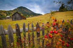 Paysage de paysage d'automne avec la forêt colorée, les granges en bois de barrières, de cynorrhodon et de foin dans Bucovina photographie stock libre de droits
