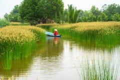 Paysage de delta du Mékong avec le bateau à rames vietnamien de femme sur Nang - type de champ d'arbre de précipitation, Vietnam  image libre de droits
