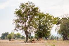 Paysage de Don Det Laos Image libre de droits