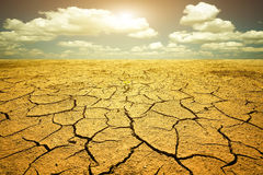Paysage de désert Images libres de droits
