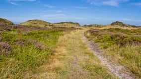 Paysage de dunes avec la bruyère de floraison Images libres de droits