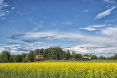 Paysage de fleur de champ de jaune de la Finlande Photo stock