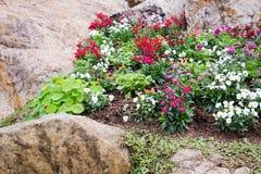 Paysage de fleurs Photo libre de droits