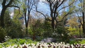 Paysage de fleurs et de nature de tulipes banque de vidéos