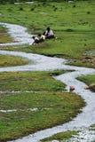 Paysage de fleuve image libre de droits