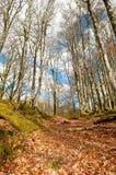 Paysage de forêt Images stock