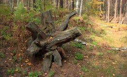 Paysage de forêt Photographie stock libre de droits