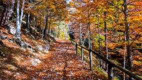 Paysage de forêt d'automne avec la route des feuilles de chute Le sentier piéton scen dedans photo libre de droits