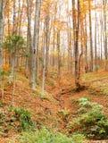 Paysage de forêt d'automne de colline Image libre de droits