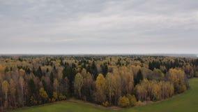 Paysage de forêt d'automne de vert jaune banque de vidéos