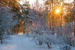 Paysage de forêt d'hiver Photos stock