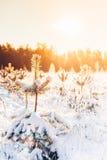 Paysage de forêt d'hiver Photographie stock