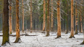 Paysage de forêt d'hiver dans la chute de neige banque de vidéos
