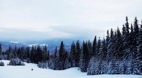 Paysage de forêt d'hiver Montagne dans la fumée carpathienne, Ukraine, l'Europe Image libre de droits