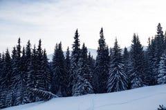 Paysage de forêt d'hiver Montagne dans la fumée carpathienne, Ukraine, l'Europe Photos libres de droits