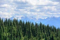 Paysage de forêt dans les montagnes, parc national olympique, Washington, Etats-Unis Images stock