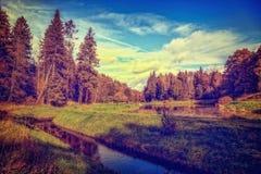 Paysage de forêt de chute Photographie stock libre de droits