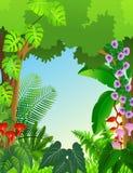 Paysage de forêt de fond tropical Photo stock