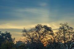 Paysage de forêt de montagne sous le ciel de soirée avec des nuages au soleil Photographie stock libre de droits
