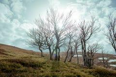 Paysage de forêt de mystère images libres de droits