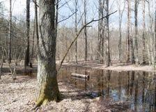 Paysage de forêt de ressort photos stock