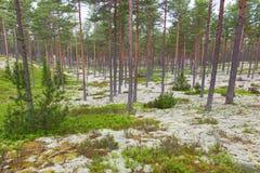 Paysage de forêt de Taiga images stock