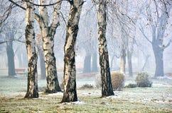 Paysage de forêt en brouillard Photographie stock libre de droits