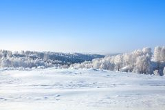 Paysage de forêt et de champ de neige d'hiver, arbres blancs couverts de gelée, collines, dérives de neige sur le fond lumineux d photographie stock libre de droits