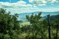Paysage de forêt et de montagnes photos stock