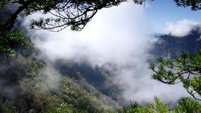 Paysage de forêt de Hubei Shennongjia clips vidéos