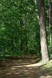 Paysage de forêt de mai Photo stock
