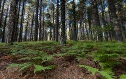 Paysage de forêt de montagne Photos stock