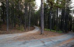 Paysage de forêt de montagne Image libre de droits