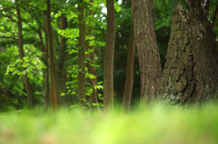 Paysage de forêt pendant l'été Photos stock