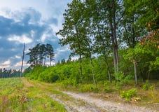 Paysage de forêt photographié à la soirée d'été image libre de droits