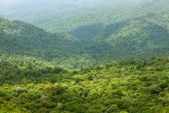 Paysage de forêt tropicale en Monteverde Costa Rica Photo libre de droits