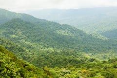 Paysage de forêt tropicale en Monteverde Costa Rica Photo stock
