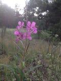 Paysage de forêt, wildflower Photos stock