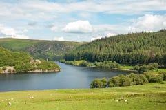 Paysage de forêts et de montagne d'été dans la vallée d'élan du Pays de Galles Images libres de droits