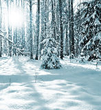Paysage de Forest Winter d'hiver Photo libre de droits