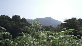 Paysage de fougères de montagne Photo libre de droits