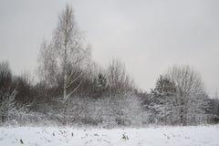 Paysage de gelée de la forêt russe d'hiver avec le bouleau photo libre de droits