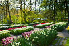 Paysage de jardin de ressort Photographie stock libre de droits