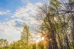 Paysage de jeune forêt verte avec le ciel bleu de coucher du soleil Photographie stock libre de droits